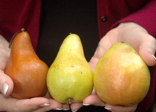 Beyond Wonderful pears for poaching.