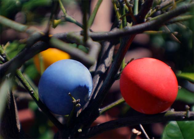 Colored Easter eggs hidde.n in the trees